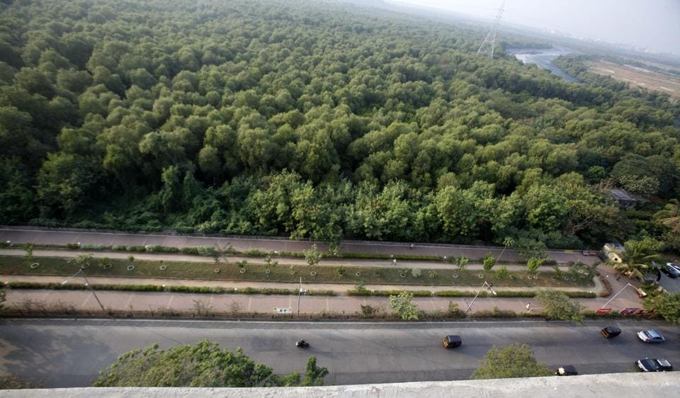 The state mangrove cell announced this on Wednesday, following a 10-day probe at two separate wetland sites in Mumbai.