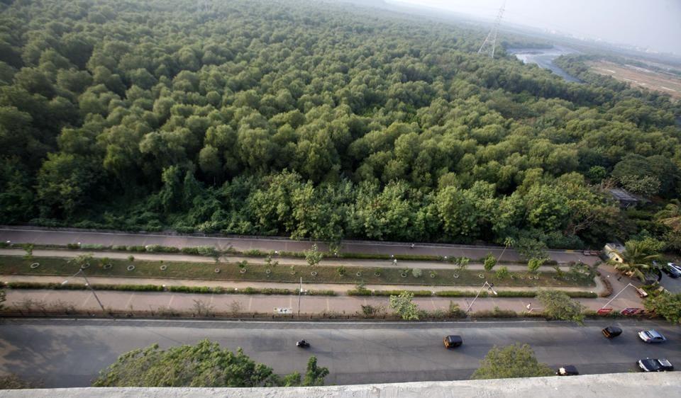 MUMBAI NEWS,MUMBAI MANGROVES,MANGROVE DESTRUCTION IN MUMBAI