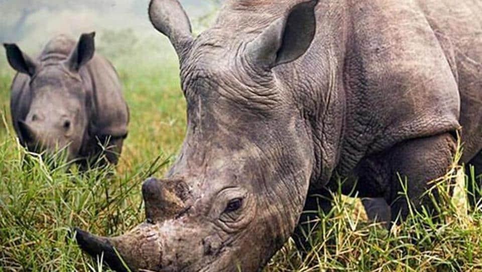 Rhino poachers,Assam,Kaziranga National Park