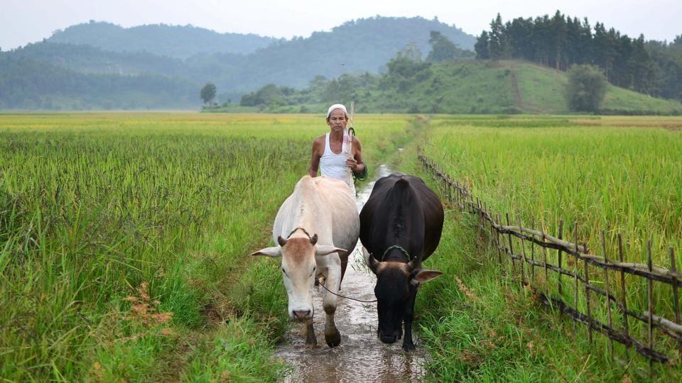 Milk production,Cattle,Centre