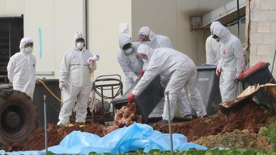 210,000 farm birds have been culled in Japan to contain another outbreak of a highly contagious strain of avian flu.
