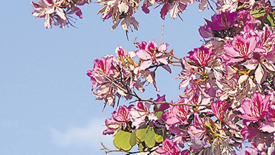 haiku moment,spiritual wellbeing,physical wellbeing
