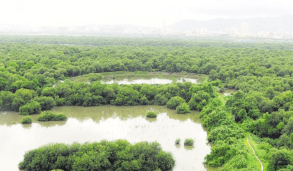 Mumbai,Mangove destruction,Debris dump