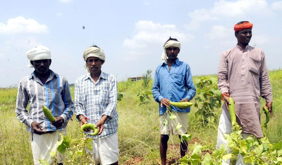 Sur Singh Meena (extreme right), along with other tribals, in village Chhaya Paschim showing the organic vegetable (sponge gourd) they have grown without using any chemical fertilizer or pesticide.