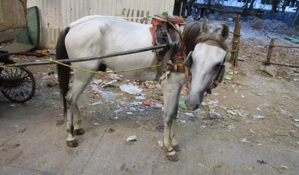 MUMBAI,MUMBAI NEWS,VICTORIA IN MUMBAI