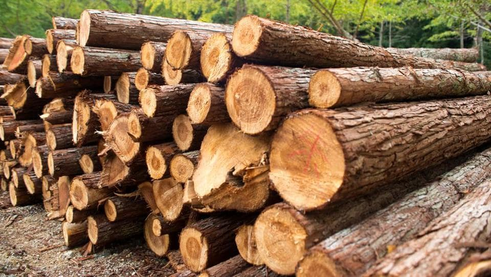 According to the report, 42% of the total roundwood and sawnwood traded globally, with an annual value of Rs 427 billion, is harvested illegally.