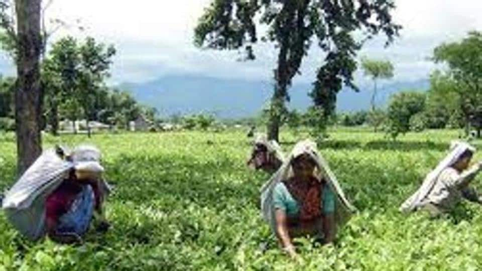 The tea gardens of north Bengal were already reeling under closures and worker death related to malnutrition.