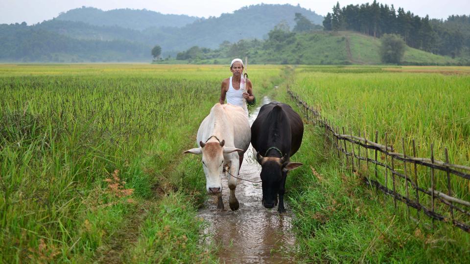 farm loan,crop loan,Ashish Kumar Bhutani
