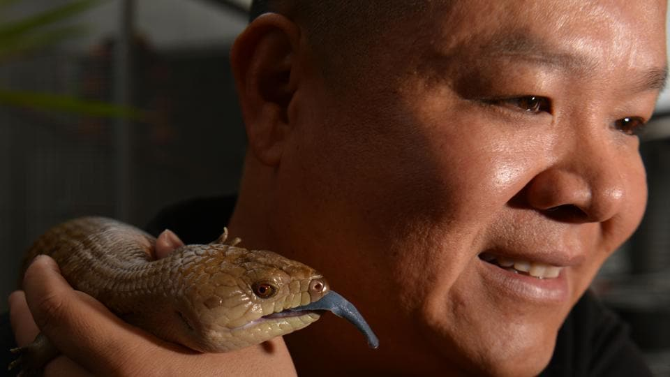 Reptile breeder Ernie Chan with his pet, a northern blue-tongued lizard at a pet store in Sydney.  (Peter Parks/AFP)