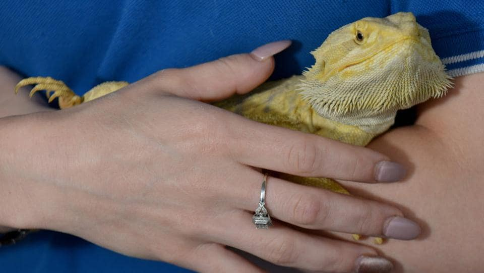 Brooke Winters with 'Mario', her pet bearded dragon in Sydney.  (Peter Parks/AFP)