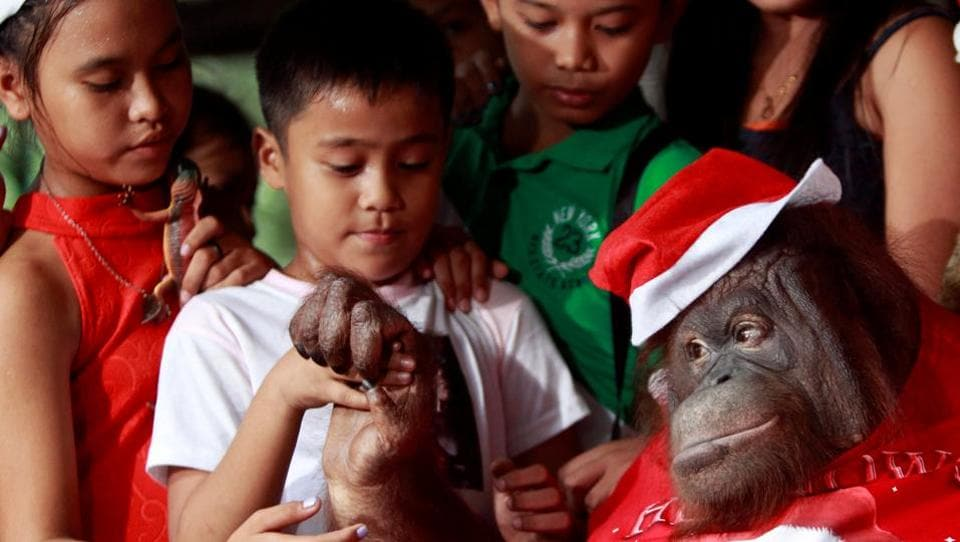 An orangutan, named Pacquiao, dressed in a Santa Claus outfit interacts with orphans during the Animal Christmas party at Malabon zoo in Manila, Philippines. (Czar Dancel / REUTERS)