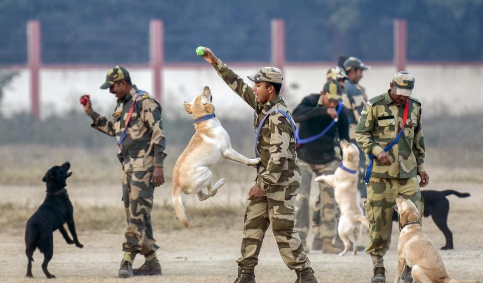 Dogs and the handlers enjoy some play after early morning PT session at National Training Centre for Dogs in Madhya Pradesh  (Kunal Patil/HT photos )