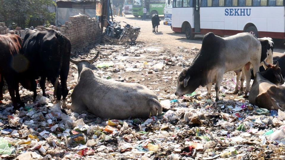 A garbage dump at the Bathinda bus stand on Friday. Garbage is not cleared for days together.