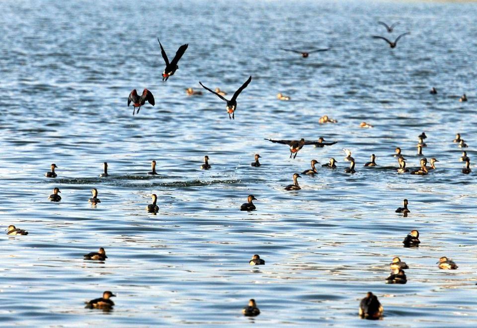 Jharkhand news,ornithologists,bird census