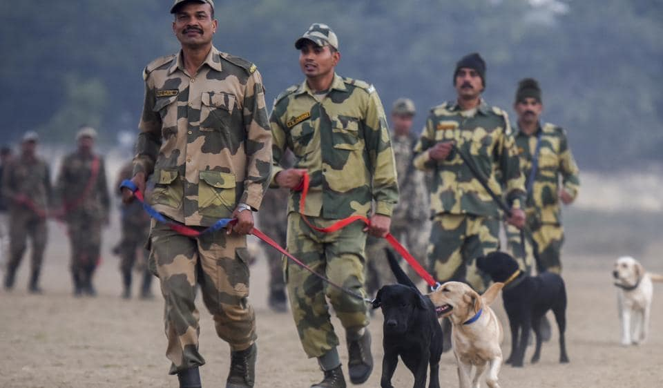 Dogs,Canines,NTDC