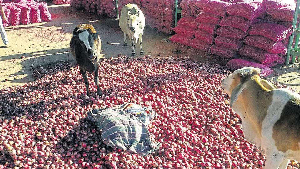Some distressed farmers threw their onion produce in front of stray cattle at the Neemuch market in December.