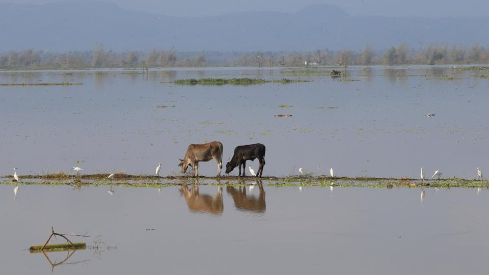 Flooded rice fields pictured after heavy rains and strong winds brought by Typhoon Nock-ten that battered Camarines Sur, central Philippines.  (Romeo Ranoco/REUTERS)