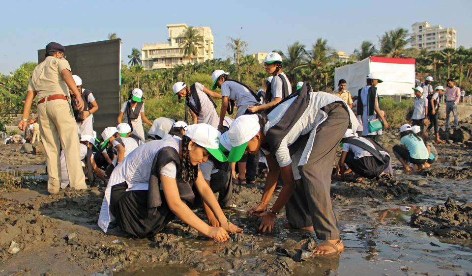 School children clean mangroves along Carter Road in Bandra on Tuesday.
