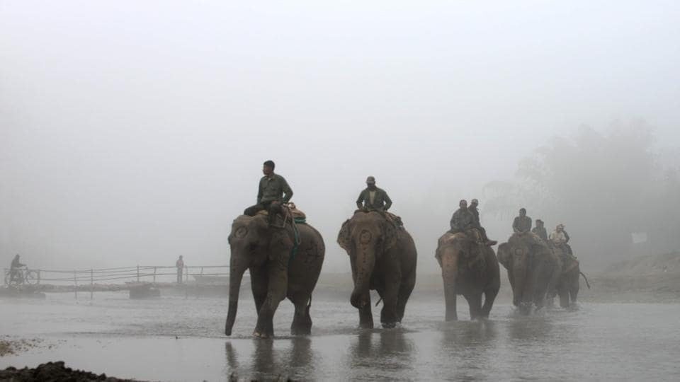 Nepalese mahouts ride their elephants to the polo grounds during the 35th International Elephant Polo Competition Kawasuti Gondhat, Chitwan District, some 235 kms from Kathmandu on December 2, 2016.