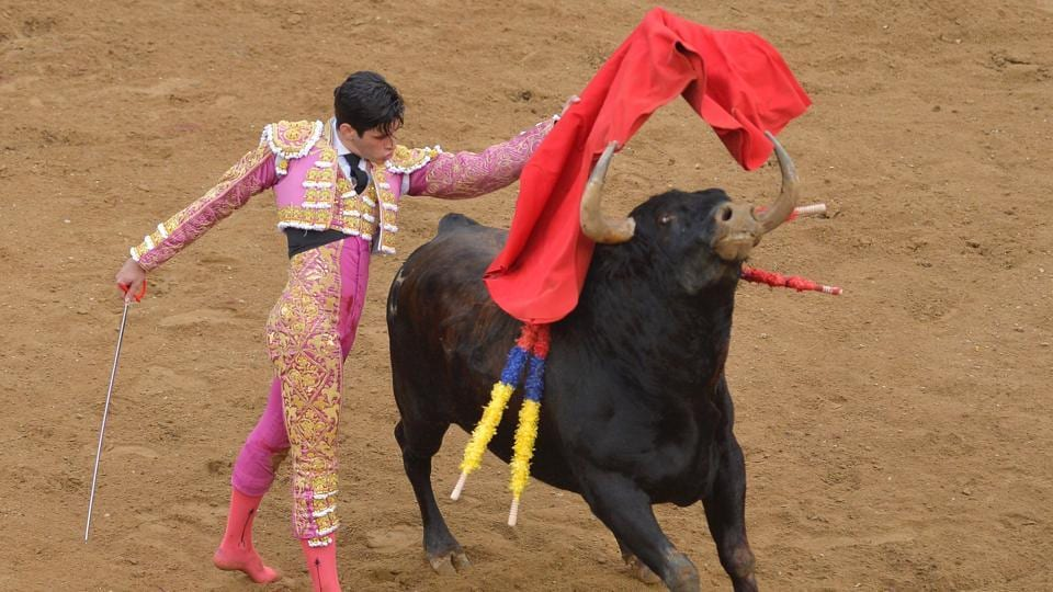 Spanish bullfighter Lopez Simon performs at the a bullfight. (LUIS ROBAYO / AFP)