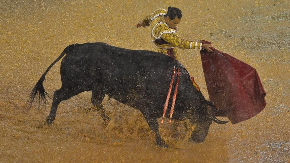 Colombian bullfighter Luis Bolivar's turn to show his skills . (LUIS ROBAYO / AFP)