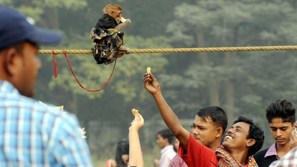 People tease a monkey at Maidan in Kolkata on Sunday. (Ashok Nath Dey/HT PHOTO)