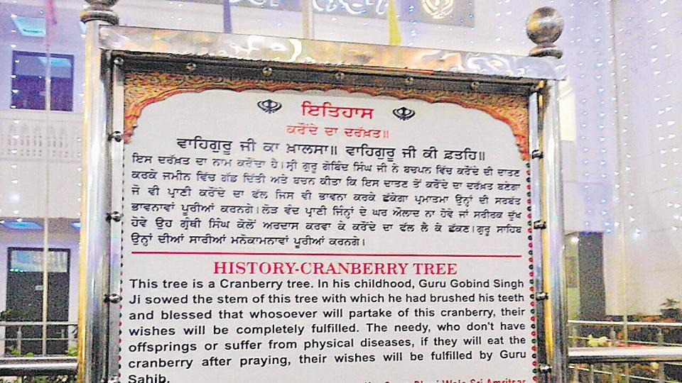 cranberry tree