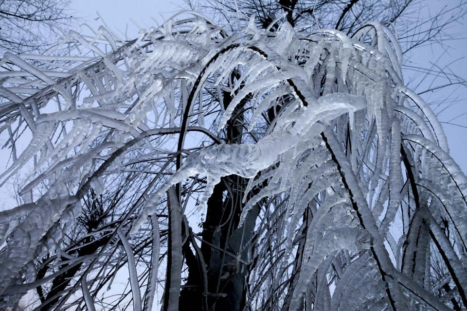 Icicles hang from a tree after snowfall at Kokernag, south of Srinagar, India  (Waseem Andrabi/HT Photo)