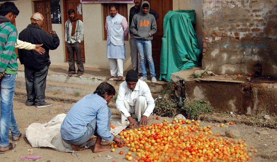 Scores of farmers dumped their tomatoes on the roads outside mandis in Shajapur on Wednesday.