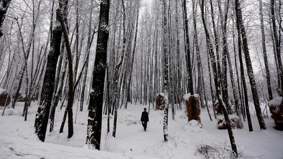 A man walks under snow-covered trees during a snowfall on a cold winter morning in Pattan, north of Srinagar, January 5, 2017.  (Danish Ismail / REUTERS)