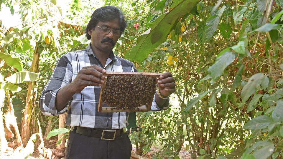 Johnson Jacob in his bee farm in Aarey on Thursday.