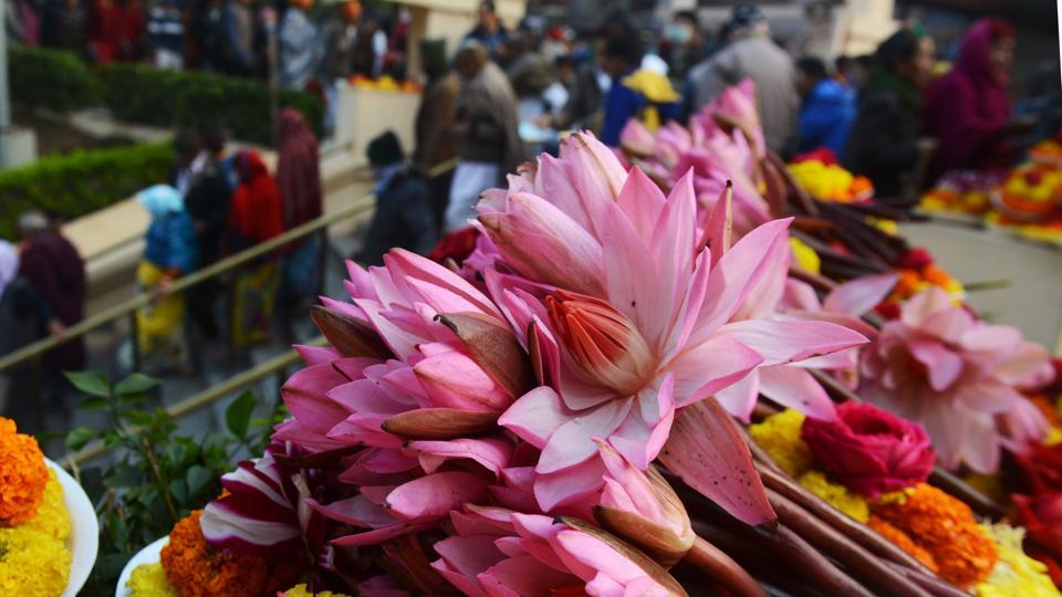 Lotuses at the Mahabodhi temple where the Buddha is said to have attained enlightenment.  (AFP PHOTO / Dibyangshu SARKAR)