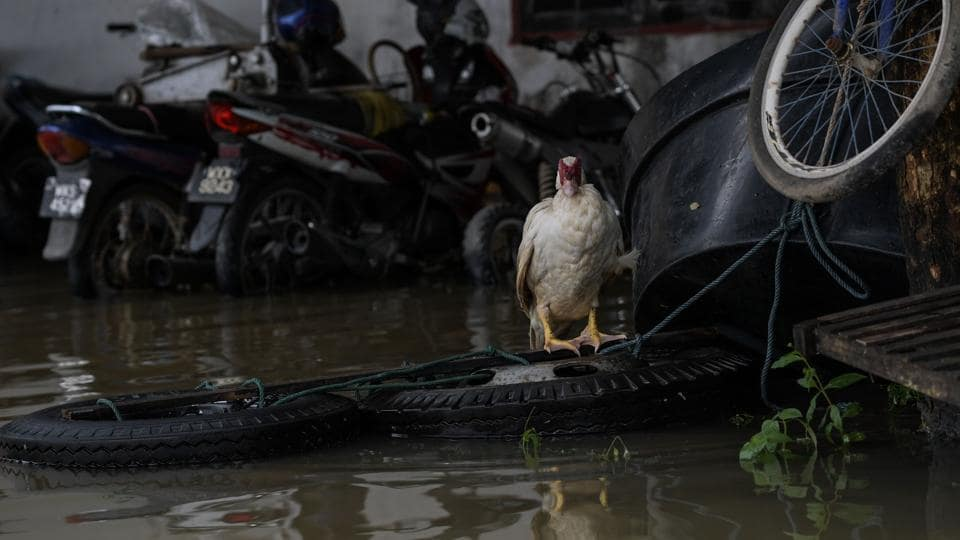 A duck stands near floodwaters in Bendang Pak Yong, Malaysia's northeastern town of Tumpat, which borders with Thailand on January 6, 2017.  (MOHD RASFAN / AFP)