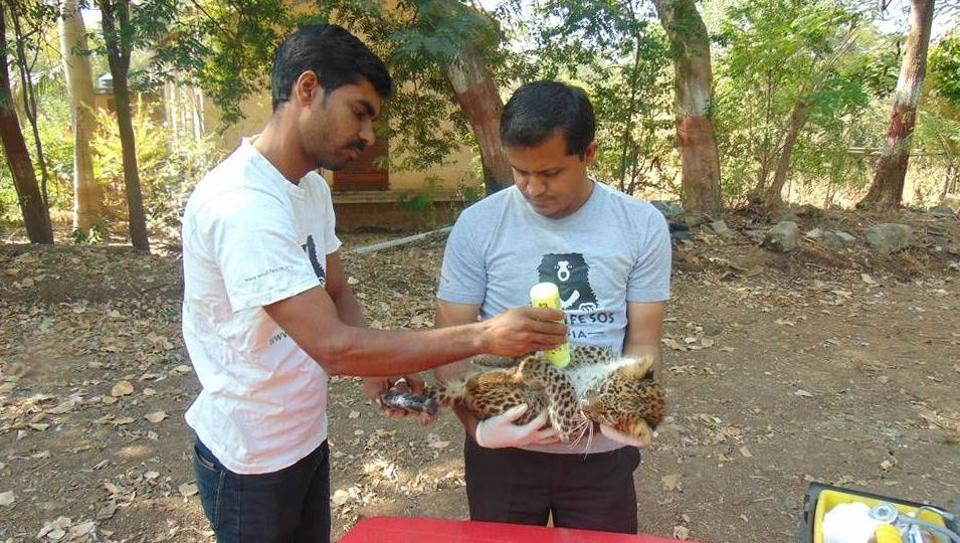 On Monday, forest officials and members of NGO Wildlife SOS took the cub to the Manikdoh Leopard Rescue Center .