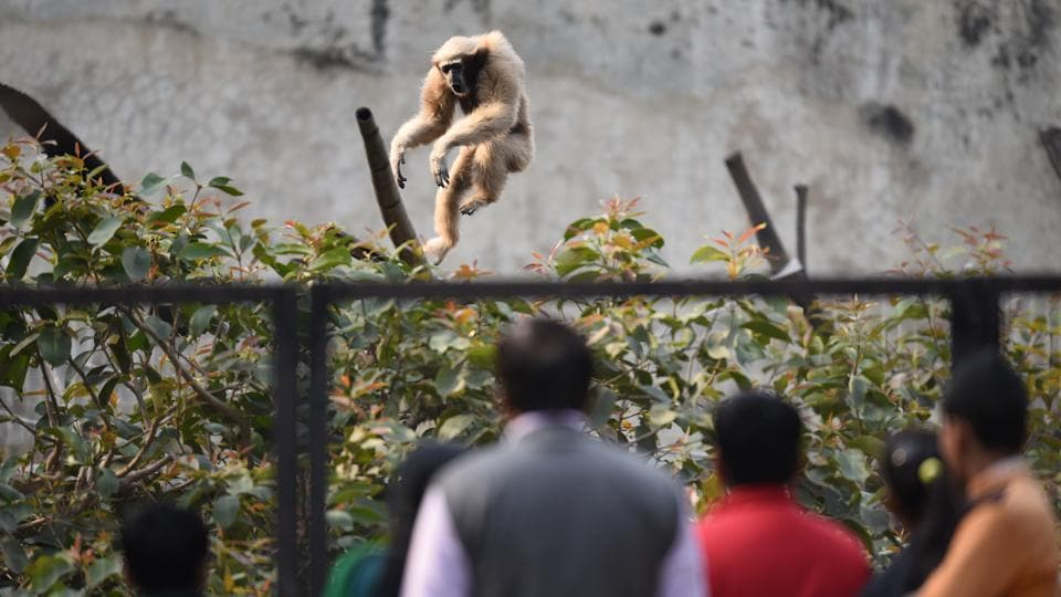 Visitors outside the monkey enclosure at the Delhi zoo. (Virendra Singh Gosain/HT PHOTO)
