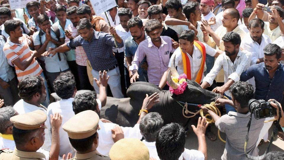 Youngsters taking part in a protest demanding revocation of ban on Jallikattu in Madurai on Monday.