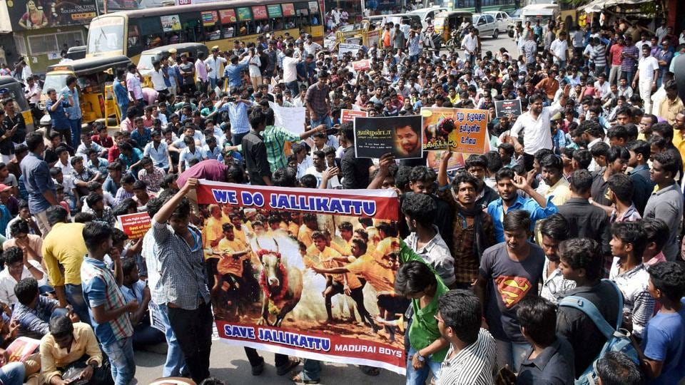 Hundreds of youths who have gathered from southern districts, participating in a protest demanding the Central government to lift the ban on Jallikattu, in Madurai on Tuesday.  (PTI)