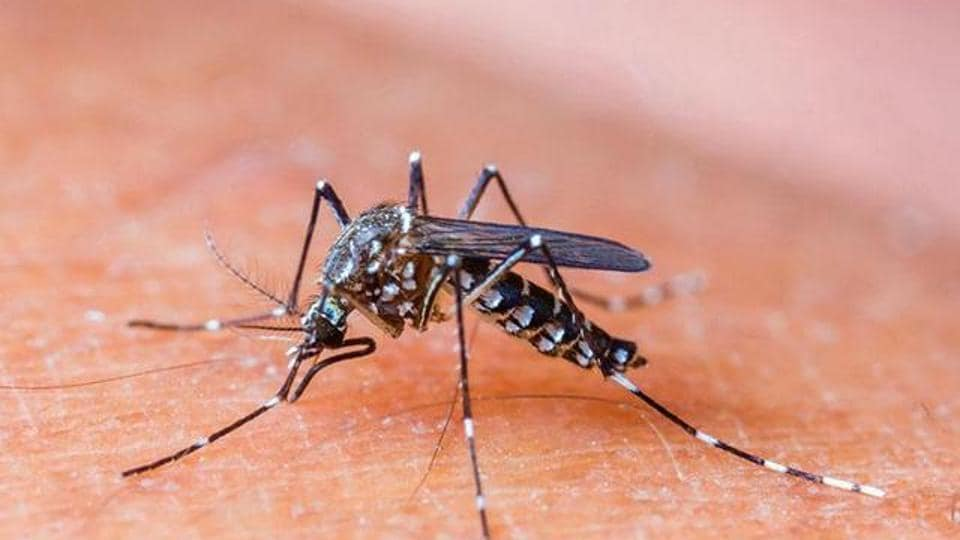 The death toll is shockingly high because the MCD has confirmed only 31 malaria cases to date, which indicates the malarial parasite killed half of those infected (HT Photo)