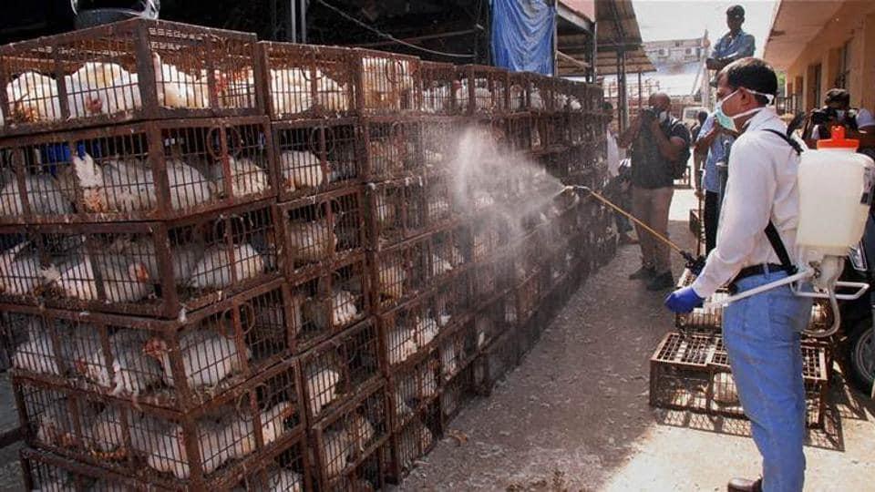 Delhi,Bird Flur,H5N8 avian influenza