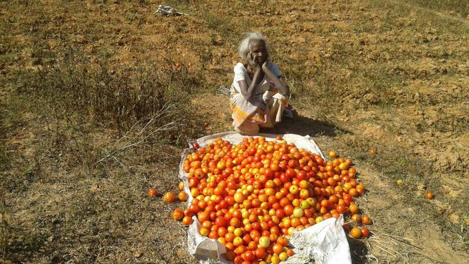 A distressed farmer dumps her tomatoes Lohardaga, Jharkhand.