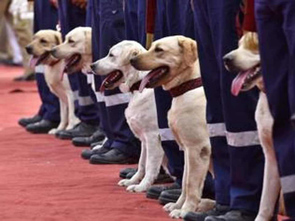 Sniffer dogs,poppy husk,Punjab polls