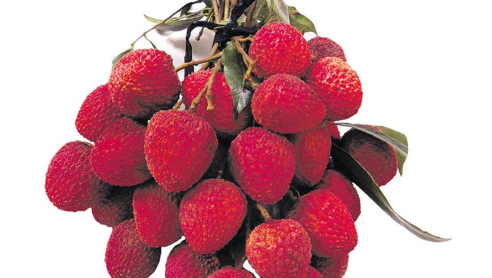 Shahi litchis of Muzaffarpur are world acclaimed.