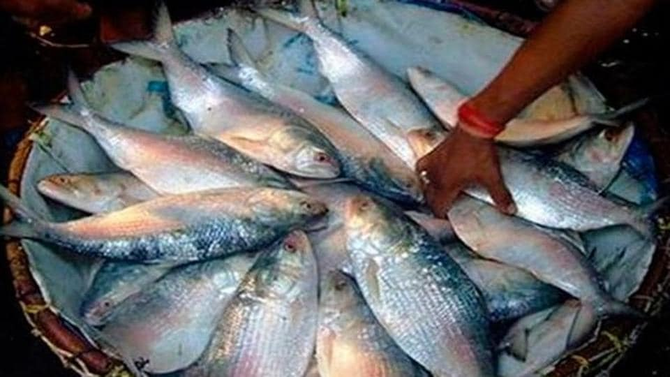 West bengal buying baby hilsa fish could land you in jail for Dream interpretation fish