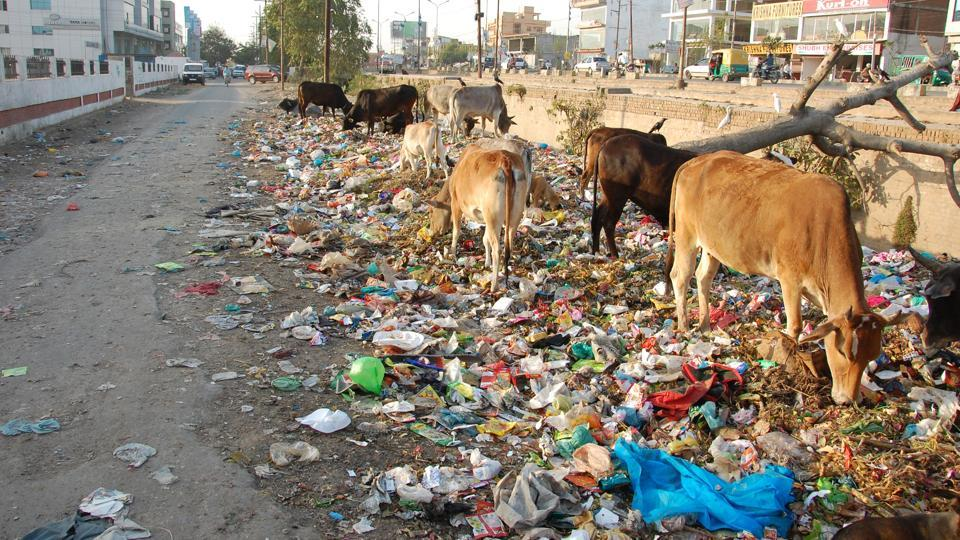 The city produces around 1,500 metric tonnes of solid waste.