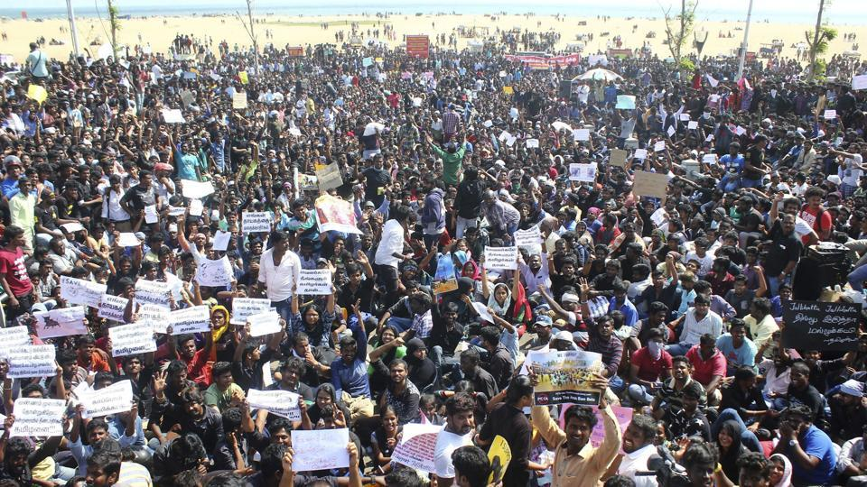 Protestors gather at Marina beach demanding a ban be lifted on the traditional sport of Jallikattu, in Chennai on Wednesday.