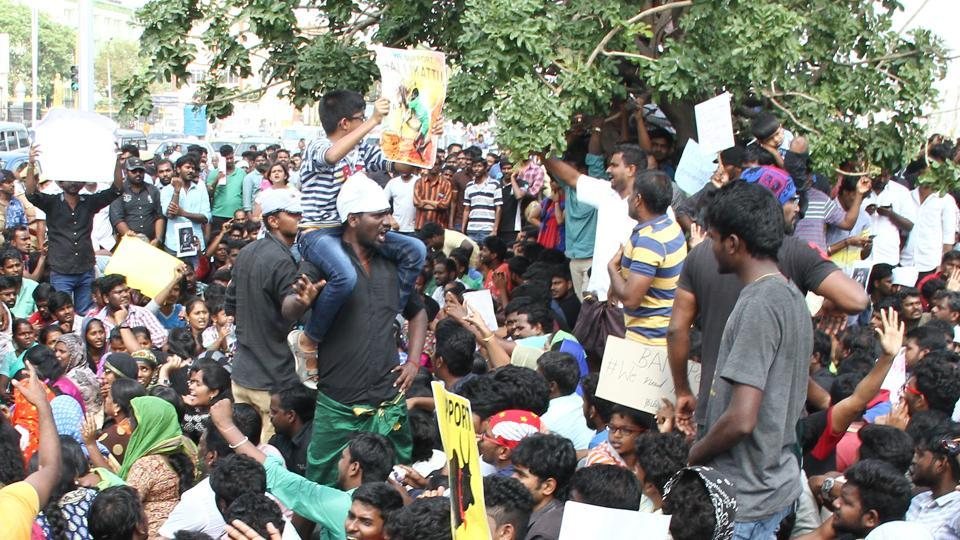 """The Madras high court refused to """"interfere"""" in the protests, saying the matter is being heard in the Supreme Court which last week refused to pass an order before the Pongal celebrations and allow the popular sport."""