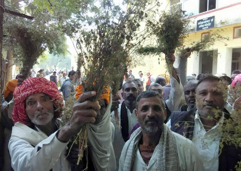 Farmers showing damaged coriander crop during a demonstration at Ramganjmandi sub division office on Wednesday.