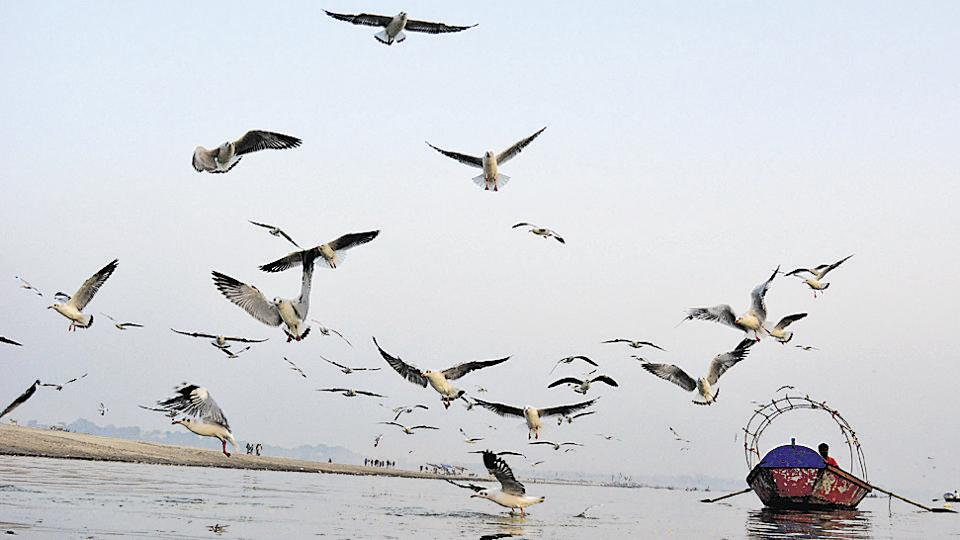 Siberian birds are regular visitors at Sangam during this time of the year.