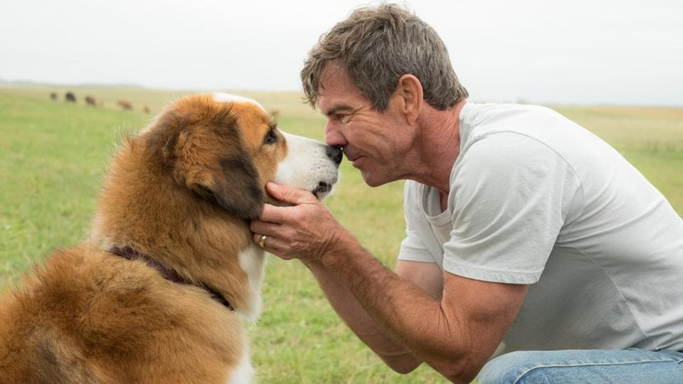 A Dog's Purpose is scheduled for release on January 2017.