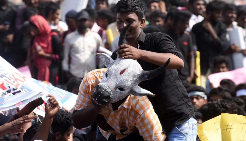 Students shout slogans and hold placards during a demonstration against the ban on the Jallikattu, a bull-taming ritual, at Marina Beach at Chennai on Thursday. They also called for a ban on animal rights orgnisation PETA.